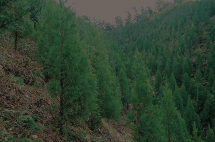 02 造林事業